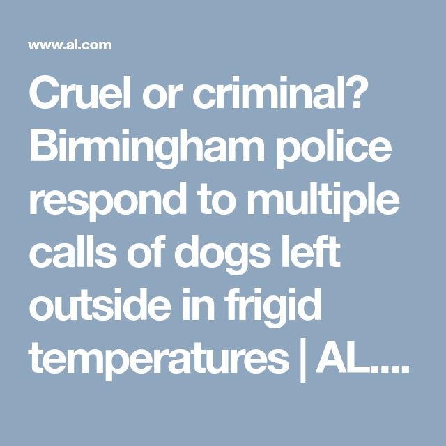 Cruel or criminal? Birmingham police respond to multiple calls of dogs left outside in frigid temperatures   AL.com