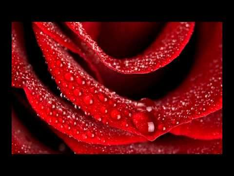Top 10 Rose HD Wallpapers For Android Windows Xp 7 8