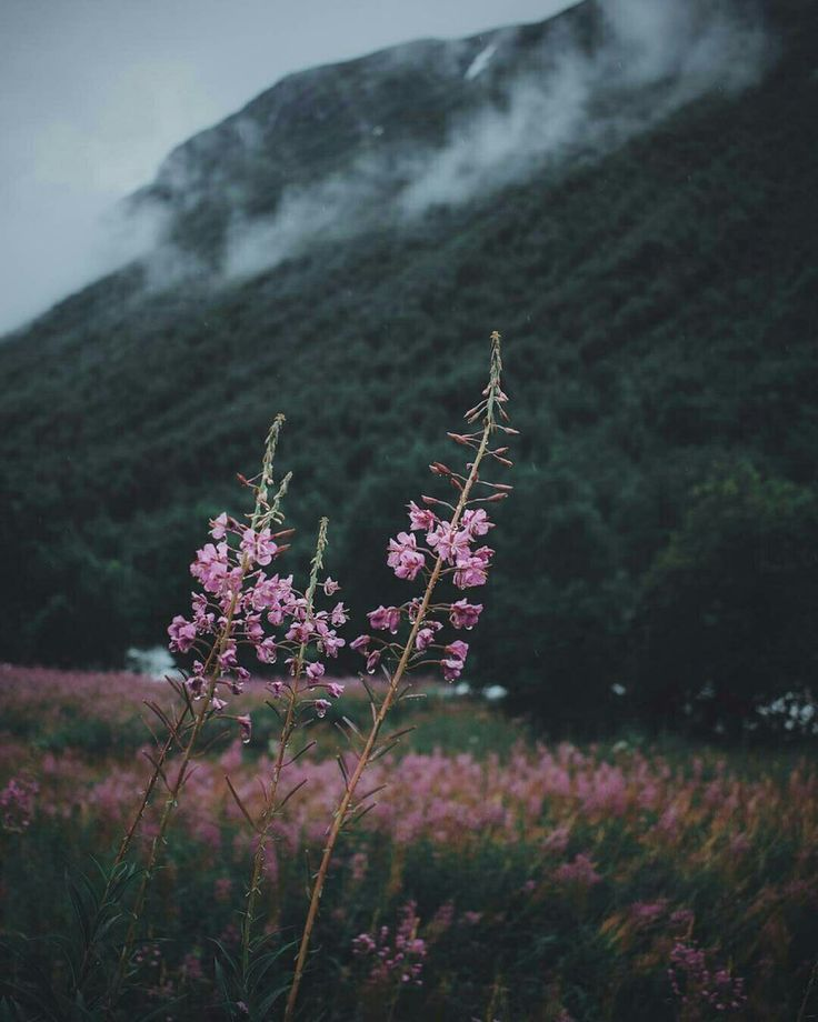 Wildflowers beside mountains