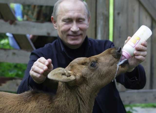 15 Adorable Putin Pictures - Imgur