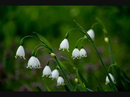 花の名前を教えて下さい。 【OKWave】