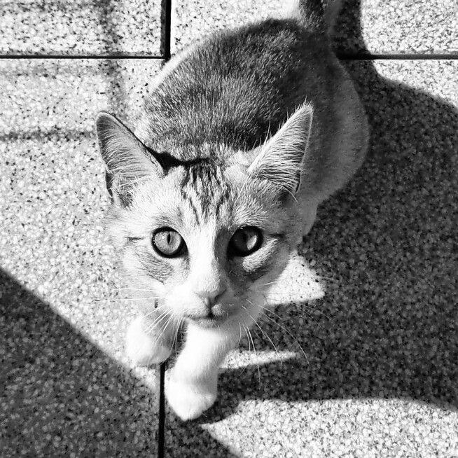 #lokalny #tygrys #local #tiger #cat #instacat #catphoto #kot #kotografia #kici #cica