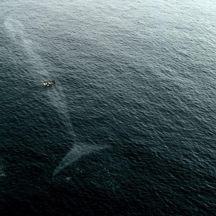 A whale. Very big whale.