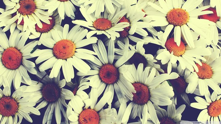 vintage flowers tumblr hd