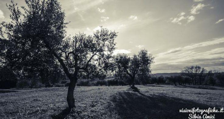 In coppia verso il sole | Visioni Fotografiche  #photgraphy #landscapesphotography