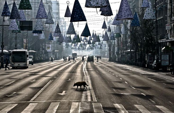 A stray dog takes advantage of the low traffic to cross an almost deserted boulevard during a spell of sunshine in Bucharest, Romania, on December 26, 2012.