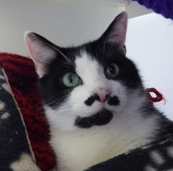 Rspca Little Valley Animal Shelter Exeter Devon Adopt A Cat Gatos