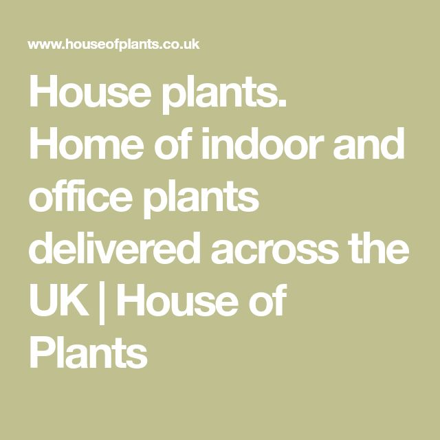 House plants. Home of indoor and office plants delivered across the UK | House of Plants