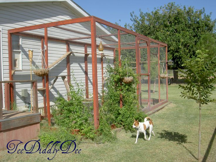 How to build an outdoor kitty cat enclosure run cat pen for Chicken enclosure ideas