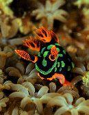 Scuba Diving at Cocotinos Dive Resort - Wori Bay - Bunaken Island - Manado - North Sulawesi