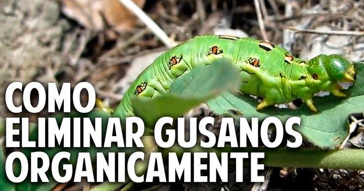Cosas del Jardin: Eliminar gusanos del huerto de forma orgánica - Gu...