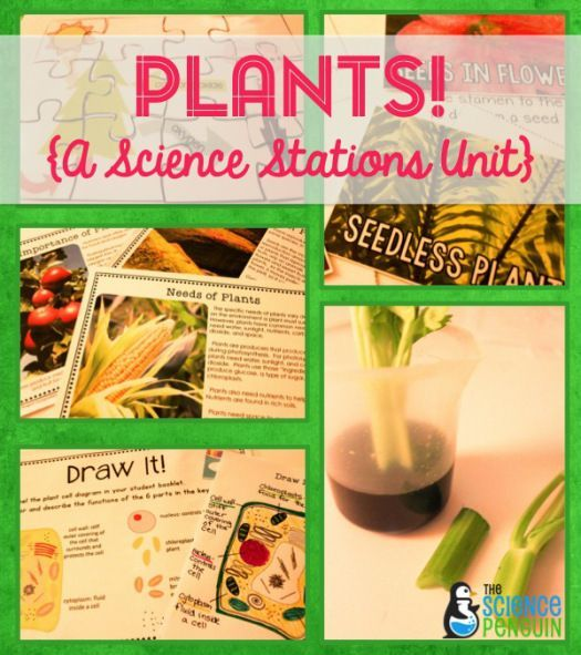 Plants {A Science Stations Unit} $ photosynthesis, cells, and internal structures-- love this for 5th grade!