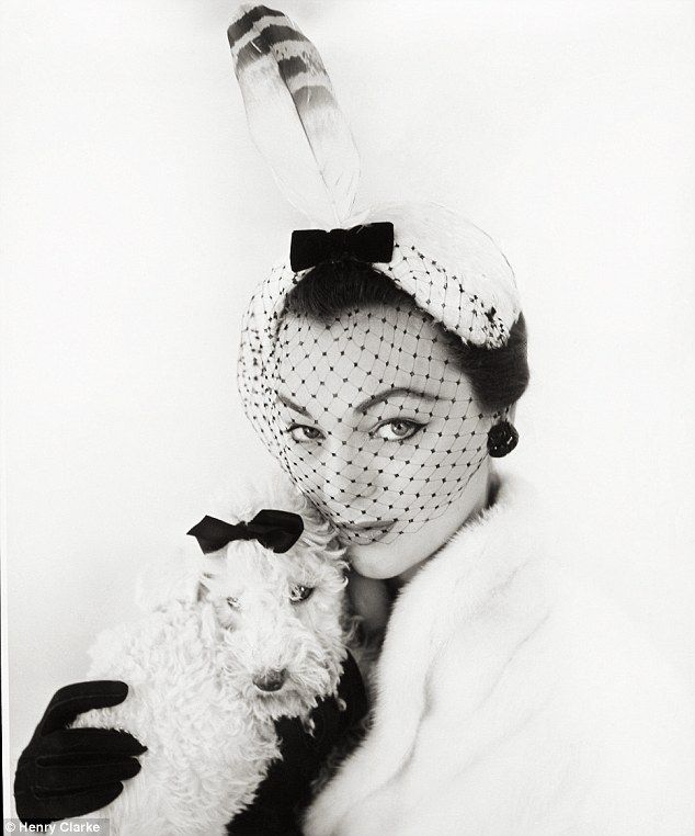 That's so necessary.: Dogs in Vogue