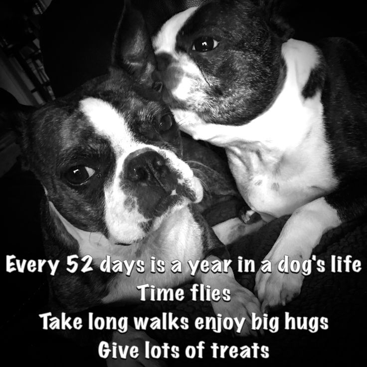 Dogs deserve it! Every 52 days is a year in a dog's life... Our Boston Terriers are our family.