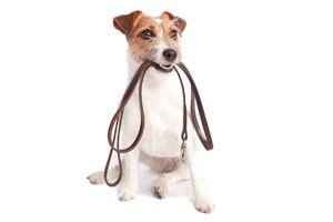 Hondentraining: wat te doen als je #hond aan de riem blijft trekken   #Petsplace