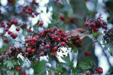 Autumn with the Nikon F80 #believeinfilm
