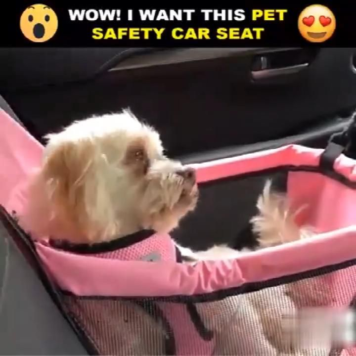Pin On Pets