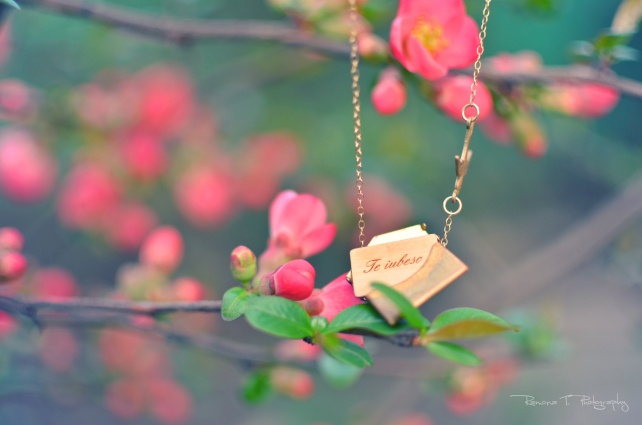 Spring.. For more photos pleasc click on the below link : https://www.facebook.com/ramona.t.photography