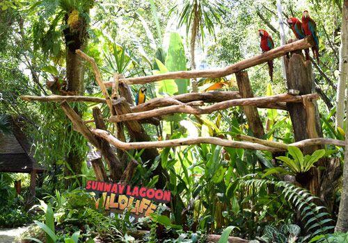 sunway lagoon malaysia    #ticket #sunwaylagoon #holiday #ezytravel #malaysia #travel #trip #journey #travelling #park #themepark #zoo #wildlifepark #family