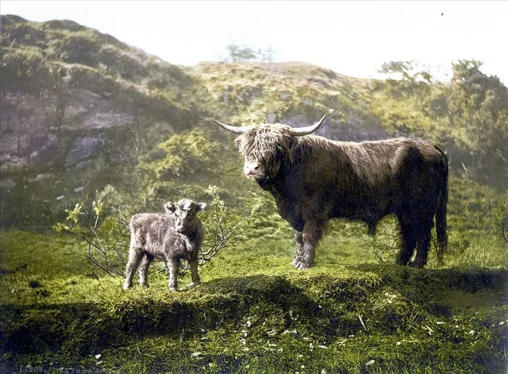 Brilliant Photochroms of Scotland in the 1890s | Design & Photography - BabaMail
