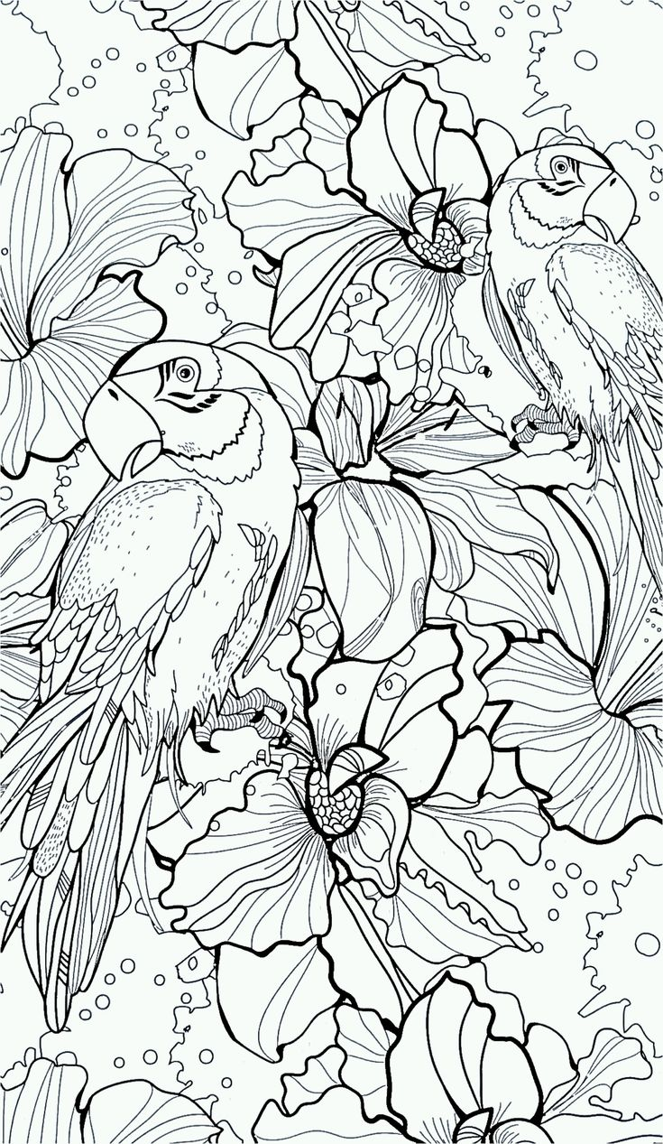Free coloring pages of peacock feathers coloring everyday printable - Parrot Flower Wings Coloring Pages Colouring Adult Detailed Advanced Printable
