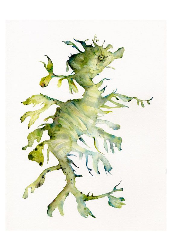 Spectacular Leafy Sea Dragon Large Archival Print of by amberalexander on Etsy