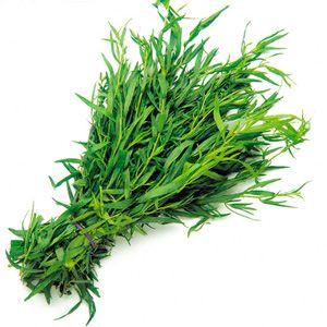 Трава тархун — маленький дракон