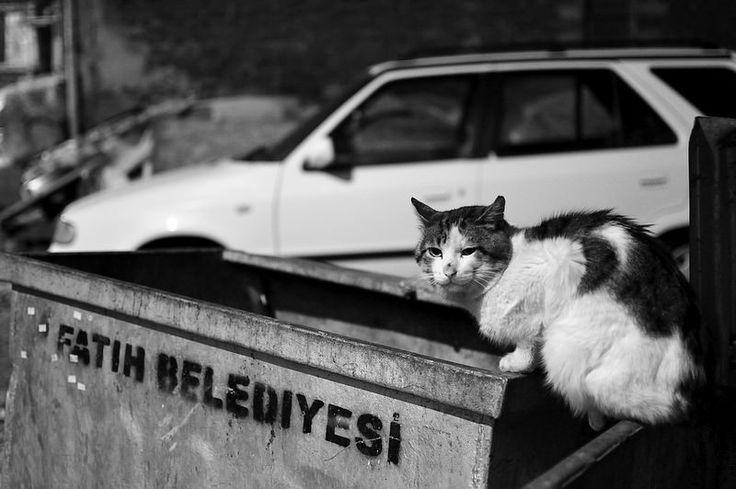 Cat Fatih - Istanbul - | Flickr - Photo Sharing!