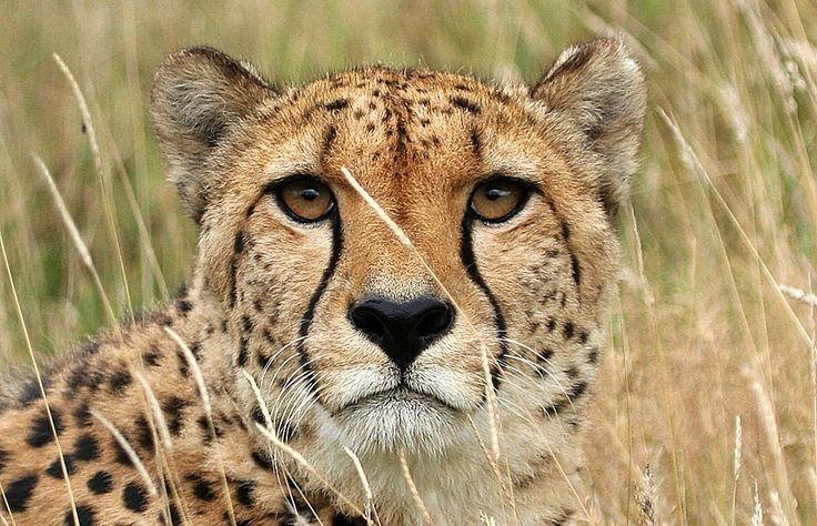 Kenya safari: Masai Mara Lake Nakuru/Lake Naivasha Great Safari
