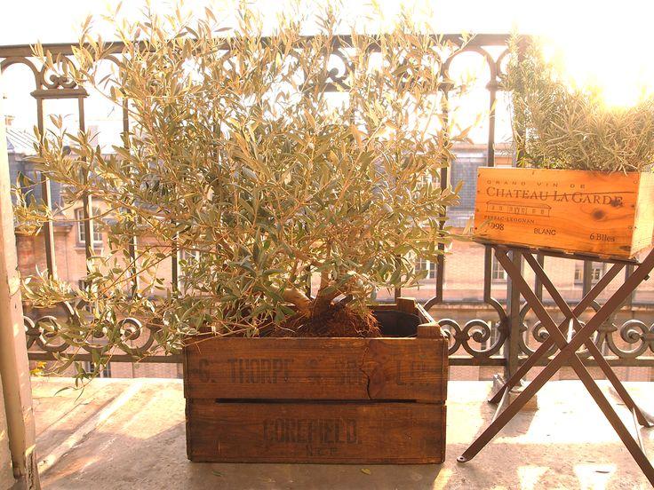 La caisse de vin, objet #déco très tendance pour votre balcon. Facile à installer et très chic pour tous vos feuillages.