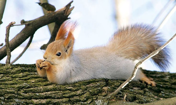 Why can't fabulous squirrels like this hang out around my house?