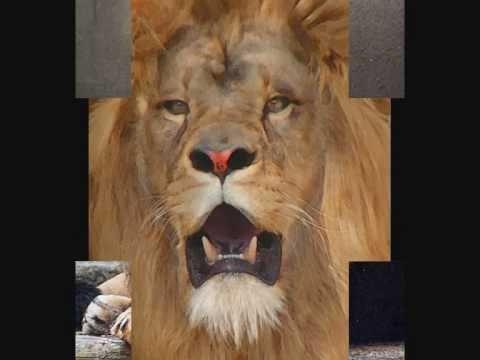 Elly en Rikkert - Daniel in de leeuwenkuil