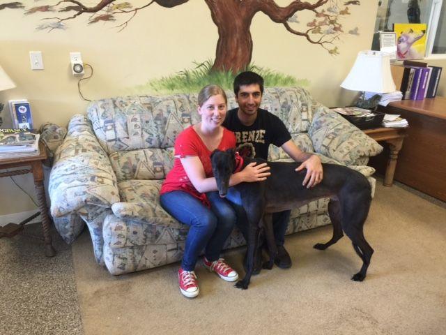 Tuffy , nka Atticus, with his new mom & dad, Sarah and Jordan.  Congratulations to this new #fureverfamily! #adoptaretiredracer #gpi #greyhound #greyhoundpetsinc #greyhoundsmakegreatpets