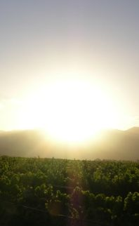The feeling of the sun on your skin, the smell of Lavender in the air, the taste of sweet red grapes from the vine...
