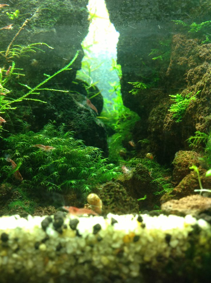 Ikea Grundtal Countertop Lighting ~ aquarium room aquascaping aquarium nature aquarium aquarium design