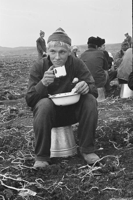working on a soviet farm