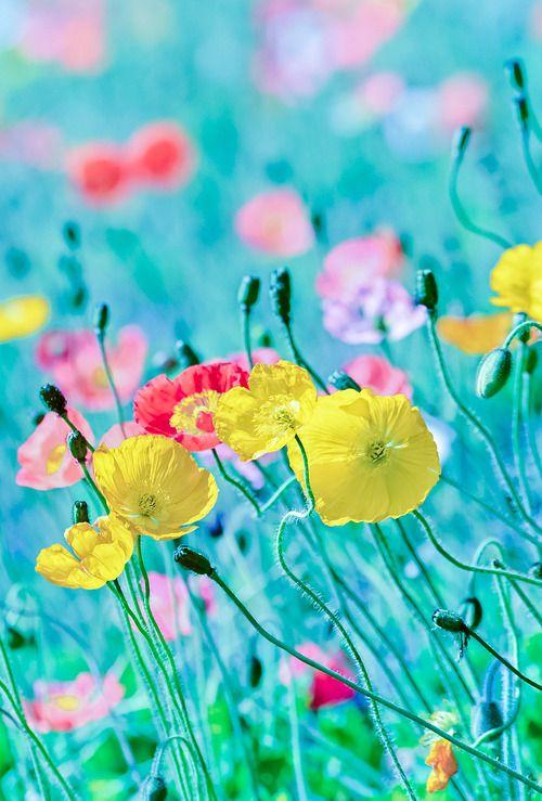 HF Flower