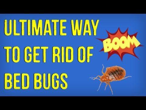Alle - Hoe maak je een natuurlijke Bed insectenverdelger aanmaken