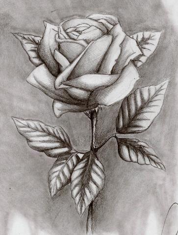 Wie zeichnet man eine schöne (detaillerte) Rose?