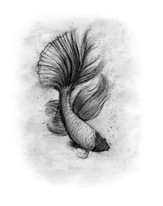Siamese Fighting Fish Charcoal Drawing by Rachael Howatson - Betta Fish - Fish Fins - Black and White Fish - Bathroom Decor - Wall Art - Wall Decor - Art Giclee Print