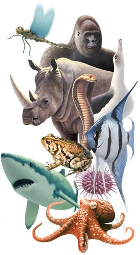 Zoology: Conservation Biology, Kingdom Animalia, Natural History, For Kids, Educational Websites, Education Website, Animal Natural, Online Dating, Animal Diversity