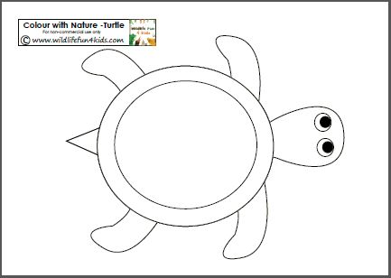colour with nature free turtle template printable plus other animals as well