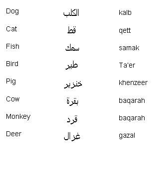 Arabic Words for Animals - Learn Arabic