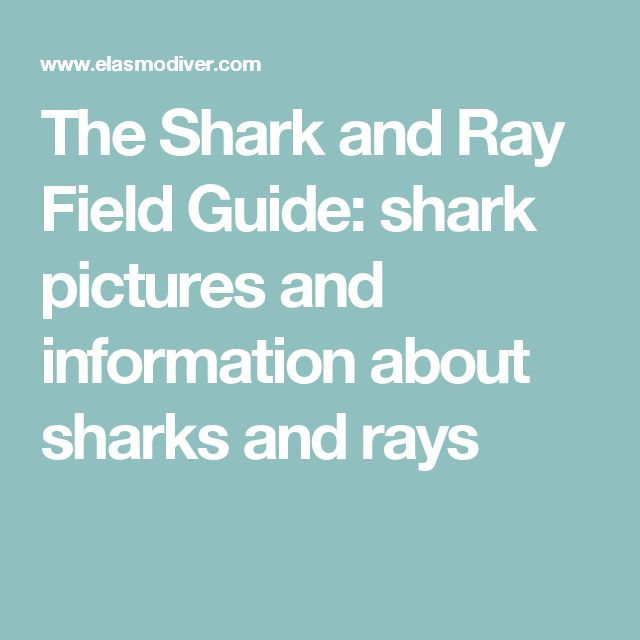 The Shark and Ray Field Guide: shark pictures and information about  sharks and rays