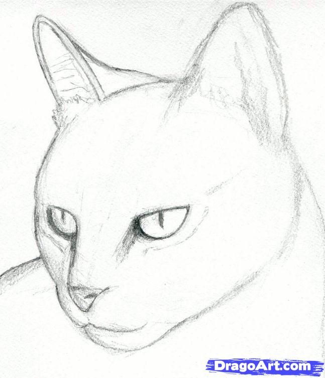 Cat Drawings Pencil | how to draw a cat head, draw a realistic cat step 3