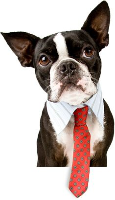 Pet Sitting Services