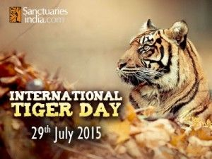 Tigers are one of the most admired animals and this magnificent creature has a day that is dedicated to it. Today, 29th July is the world Tiger Day. We celebrate this day to promote further requirements in tiger conservation.