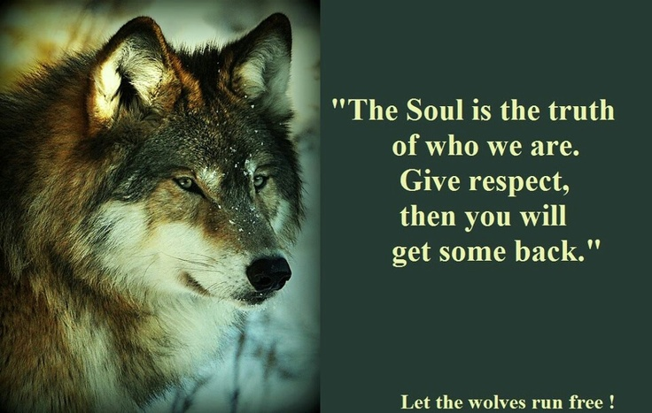 17 Best Images About Lyrics For The Soul On Pinterest: 17 Best Images About Wolf Lyrics On Pinterest