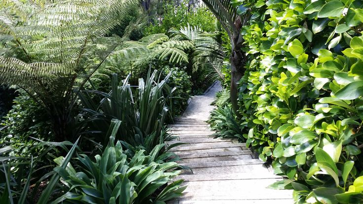 Natural garden - Landscape design, garden care services and gardening maintenance with Auckland landscaping company Second Nature Landscapers New Zealand.