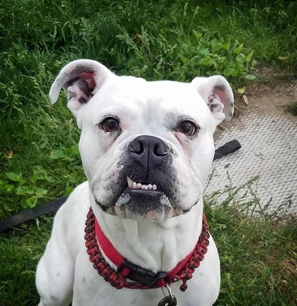 Adopt Ollie On Dog Pounds Animal Rescue Animals